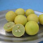 Citrus aurantifolia / Lime / Citron  Galet